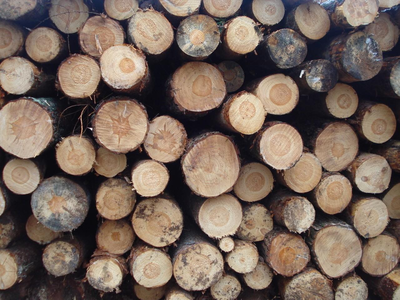 Drewno przed obróbką